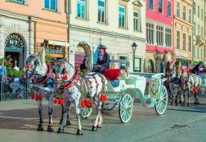 A Cracovie, les calèches sont presque aussi nombreuses que les voitures.